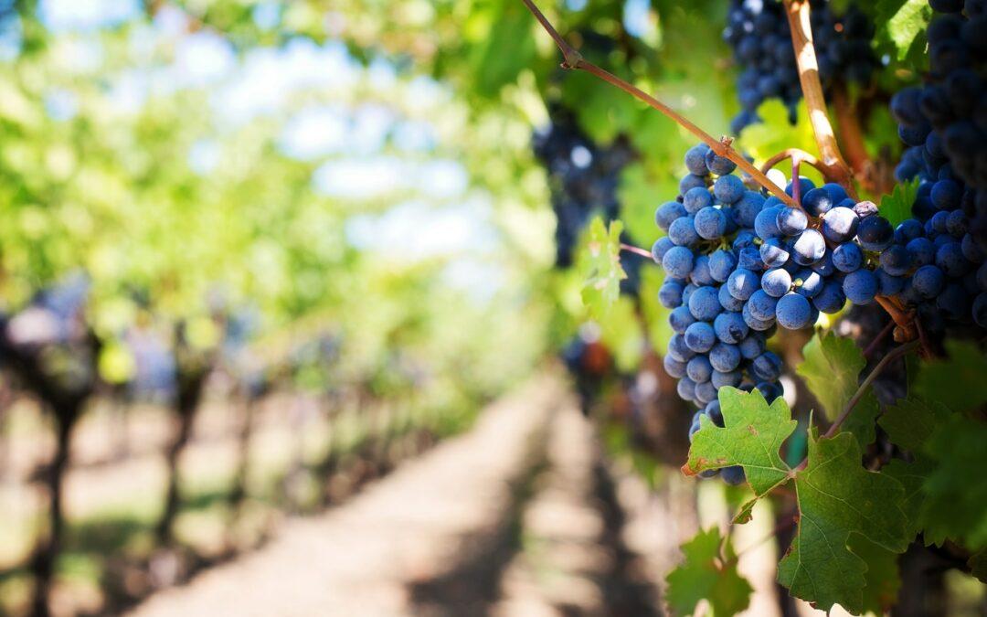 Seeking Vineyard Workers
